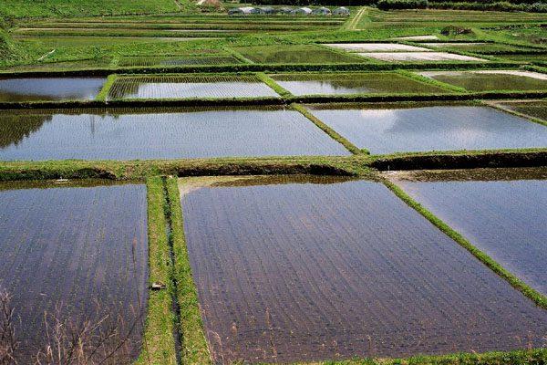 水田と減反政策