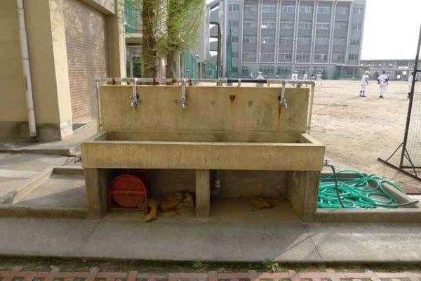 学校の校庭にある水飲み場