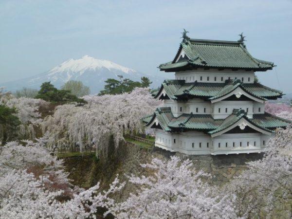 満開のソメイヨシノに囲まれた弘前城