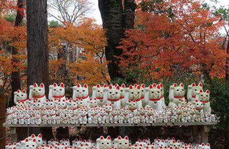 豪徳寺の紅葉と招き猫