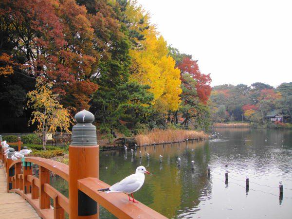 洗足池公園の紅葉