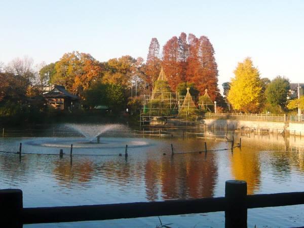 紅葉の碑文谷公園