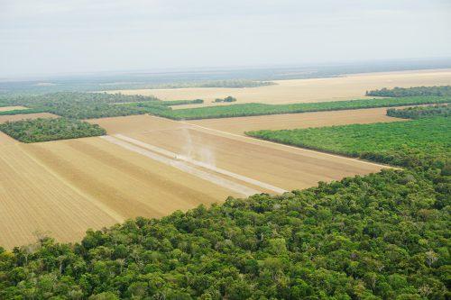アマゾンの森林破壊の現状