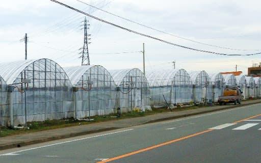 熊本県植木町のスイカハウス群